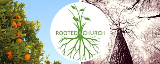 Rooted in the Church